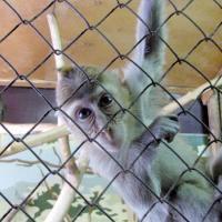 Чем живёт Витебский зоопарк, или Не кормите животных просроченными продуктами!