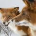 Любовь втроем у аистов.  В Минске открывается скандальная выставка про брачное поведение животных
