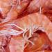 Производство креветок угрожает экологии и рисоводству Вьетнама