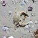 Микропластик делает животных более уязвимыми для хищников