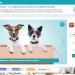 В Беларуси появилась социальная сеть для домашних животных и их владельцев
