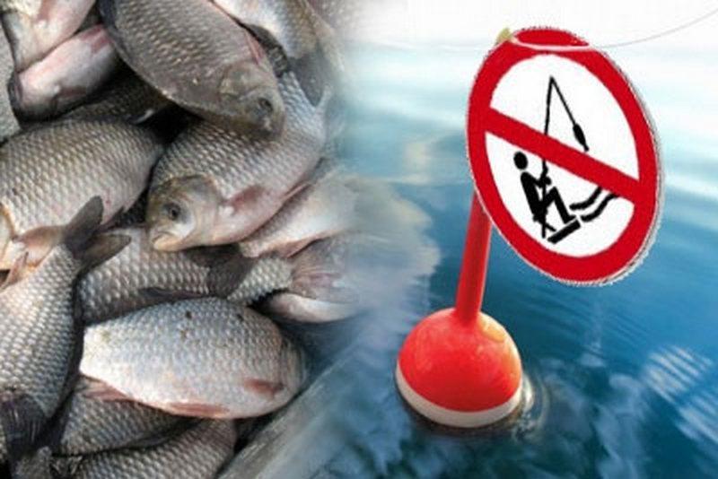 где можно ловить рыбу в нерестовый запрет